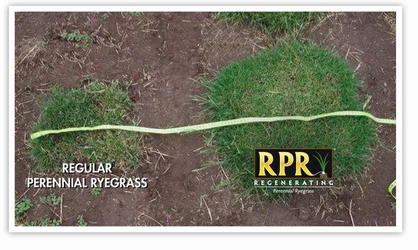 RPR_Denser_sward.jpg